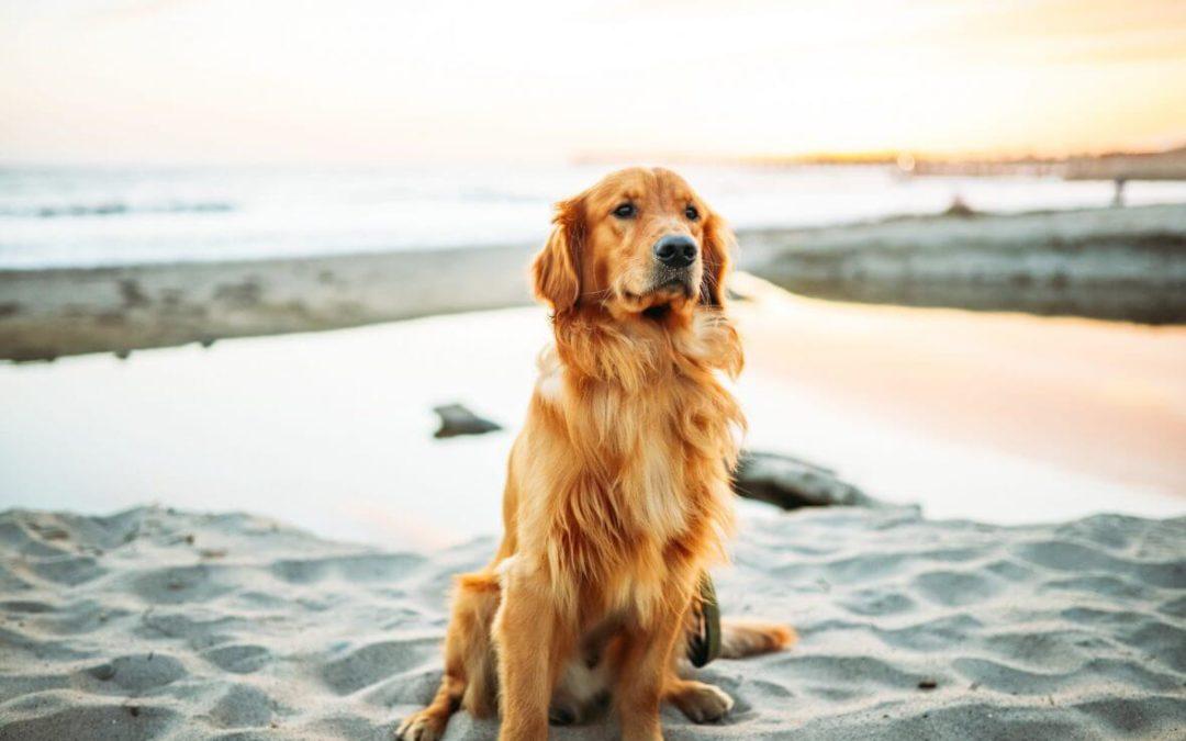 ¿Quién se queda al perro tras el divorcio?